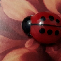 ladybirddahlie